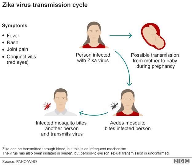 Zika Virus Transmission Cycle